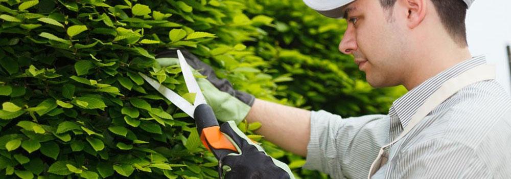 jardineros-facility-services-940x550